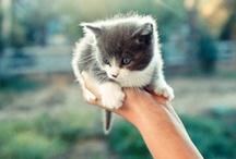 CRAZY CAT LADY** / by Crystal Richardson
