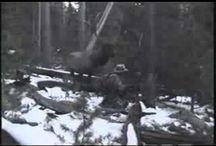 Elk hunt / by Jeremy Campbell