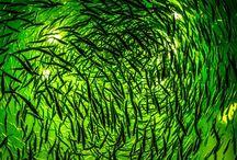 Insta --- green