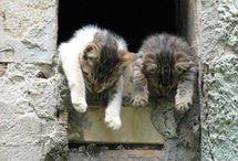 ~Cute Animals~ / Puppies! Kittens! Etc!  / by Jennifer Farley   Savory Simple