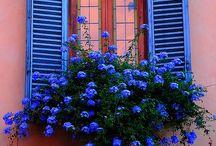 Jardinières aux fenêtres