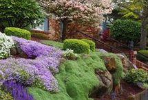 conifer garden design
