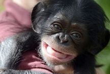 Funny Monkey / One of the largest collections of funny pictures of monkeys that you see.