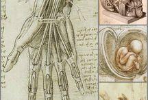 The History of Medical Evolution / by Lasheeda Streeks