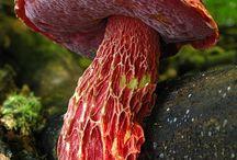 Textures champignons / Détails de textures de champignons