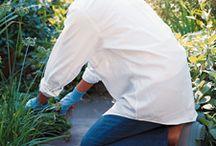 Gardening / by Sandy Kelly