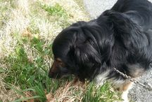 Pinto! / This is my cute mix dog named Pinto. He is 8 years old and loves to cudle.