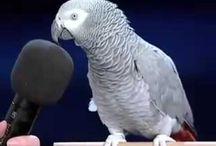 Funny Animal Jokes / Very Funny animal Jokes