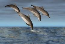 dolfijn en orca,s