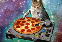 Кошки и пицца