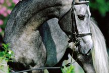 Equestrian Excellence / Everything to do with horses and the lifestyle that accompanies them. / by Ashlee Miller