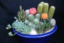 my dish garden