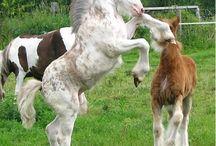 Horse study: Foals