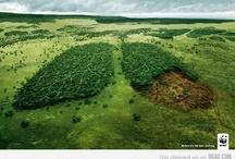 Loving the environment