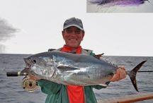 BLUEFIN TUNA / Bluefin tuna fly fishing.  Fly fishing for bluefin tuna.
