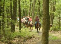 Trail Riding / by Marie Goldbronn