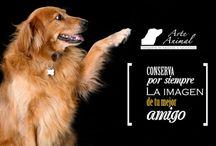 Frases en Arte Animal / Pensamientos, reflexiones, y frases célebres sobre el amor por los animales