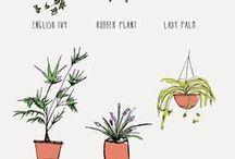 ilmaa puhdistavat kasvit