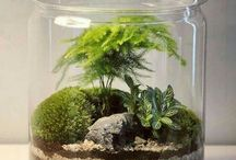 Forest in the Jar
