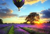 Hot air balloon / by Linda Farina-Lunz