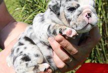 Puppy I want ❤