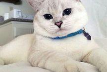 onbaşı ... CAT.....