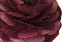 Flowers (Reales, fondant, de papel)
