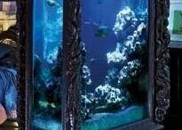 Fishtankd