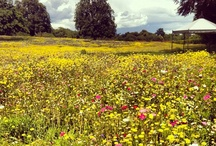 Explore The Grounds / Coworth Park is set om a 240 acre country estate in the 'royal landscape' of Berkshire. The famous wildflower meadow in front of the beautiful Mansion House is a #mustsee