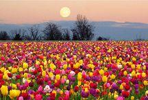 May Full Flower Moon