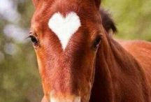 Hevoset ♘