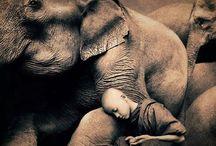 amo alos elefantes