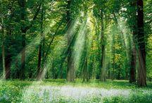 tableau forêt de lumière