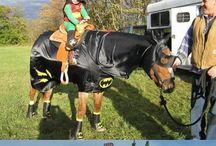 Crazy Equestrians