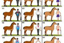 scheren van pony en paard