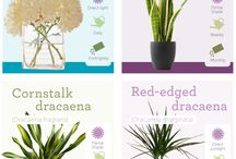 Plant benefits