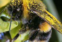 Bats, Bees and other pollinators.