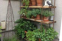 Gardening & herbalism