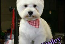 Small Breed Grooms