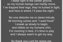 Dog's Prayer