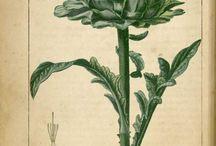 Rośliny w stylu Vintage