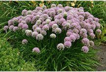 tuinplanten / Verschillende soorten tuinplanten