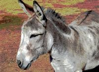 artworkscolorado.com  Donkeys, Dogs and more Photo prints / Donkeys and dogs etc.. prints on ready to hang canvas.