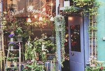Flowers shop inspiration