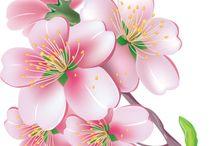 Весна... цветение