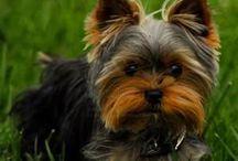 puppy pics / by Clare O'Shea