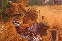 imagens de caça
