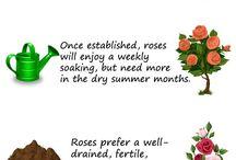 Gardening berkebun