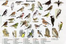 all species of birds I've seen in the forest