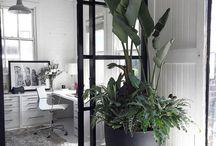 rostliny v interiéru
